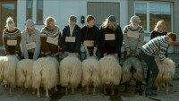 Estrenos: «Rams: la historia de dos hermanos y ocho ovejas», de Grímur Hákonarson
